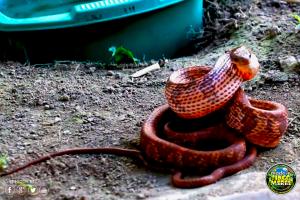 El Serpentario Animal's Paradise en Tingo María
