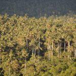 Área de Conservación Privada Bosque de Palmeras - Taulia - Molinopampa, Amazonas