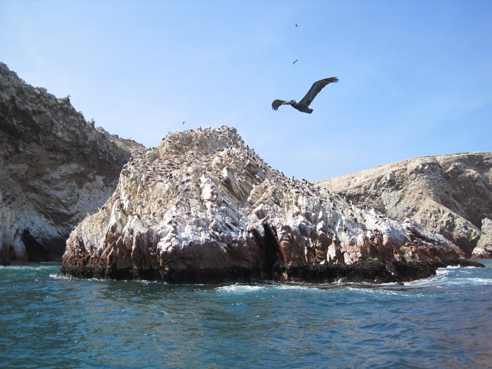 Fin de Semana en Pisco: Visita las Islas Ballestas
