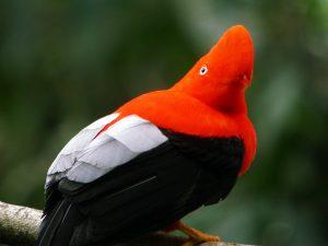 Destinos Turísticos de Perú: Parque Nacional del Manú