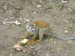 Sierra del Divisor Isla de los Monos