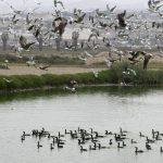 Día Mundial Aves Migratorias Pantanos de Villa