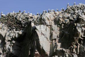 Día de las Aves Migratorias Paracas