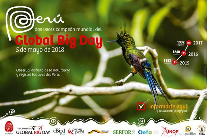 Global Big Day Peru