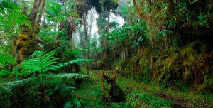 Parque Nacional Yanachaga Chemillén Pasco Pozuzo