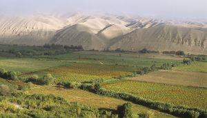 Tacna Valle de Locumba