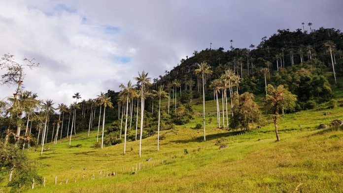 parque nacional de cutervo