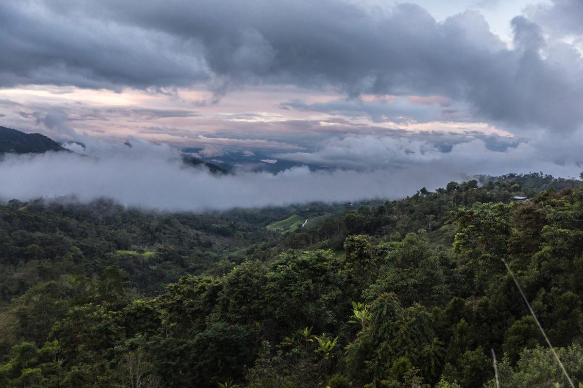 bosques nublados de udima