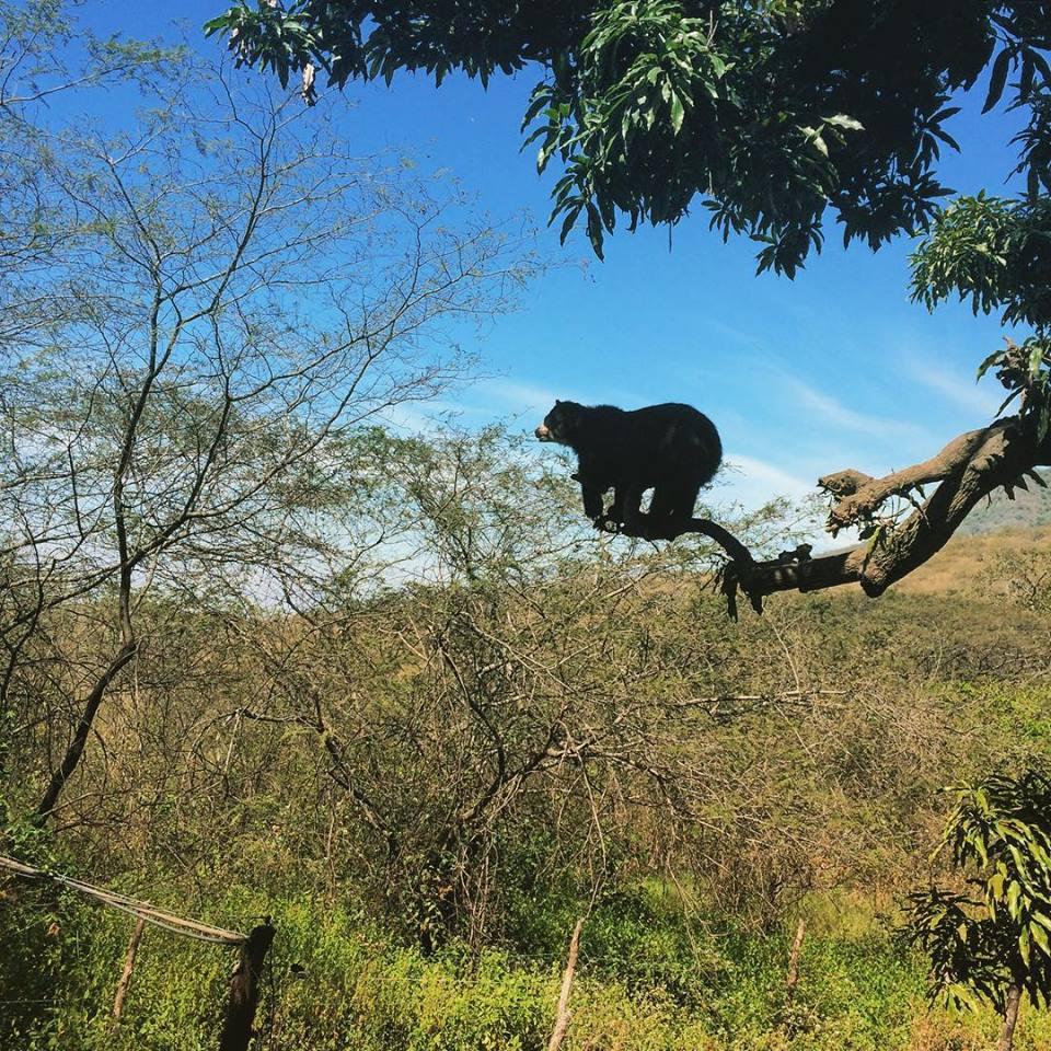 Reserva de Chaparri. Foto: @perucelebra