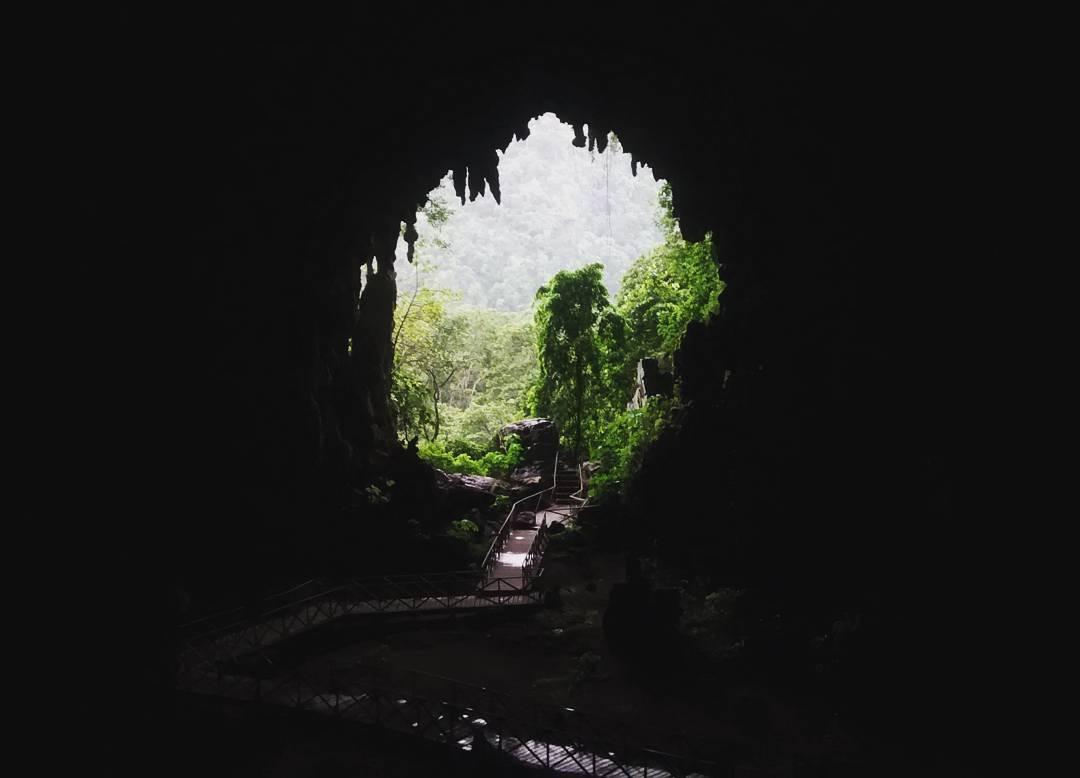 reservas naturales de la selva