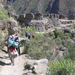 Llegada a Patallacta por el camino inca