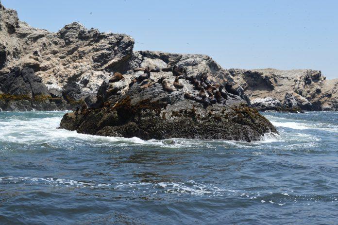 Isla de Paita