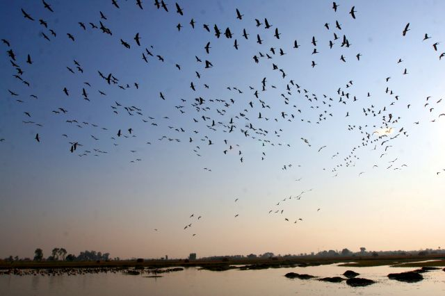 Aves migratorias Peru