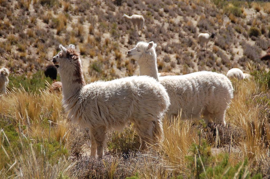 Salinas y Aguada Blanca 1