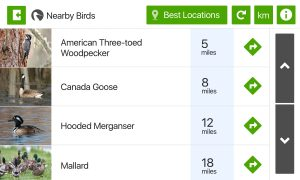 Ebird Global Big Day